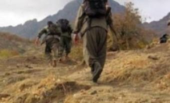 Türkiyədə 36 PKK terrorçusu zərərsizləşdirilib