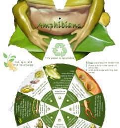 Amphibian Education Resources [ 4961 x 3189 Pixel ]