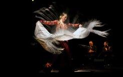 azabache_flamenco-002