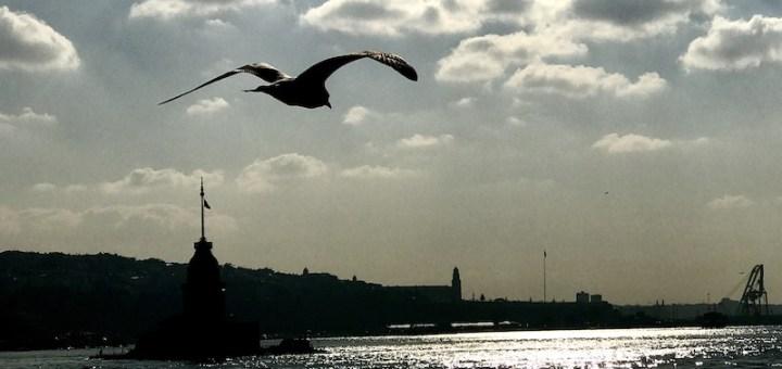 Istanbul and Seagull by Azem Alptekin