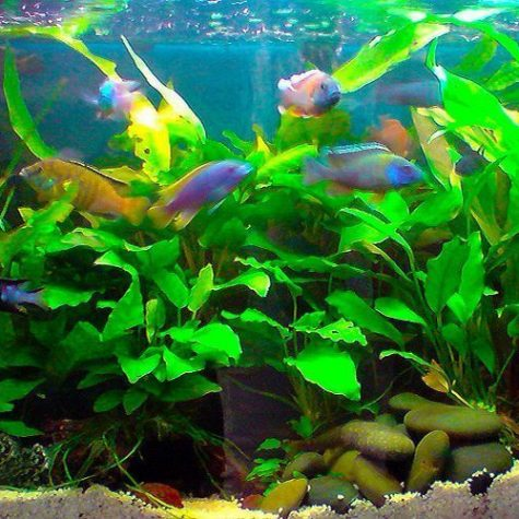 buy colorful tropical fish
