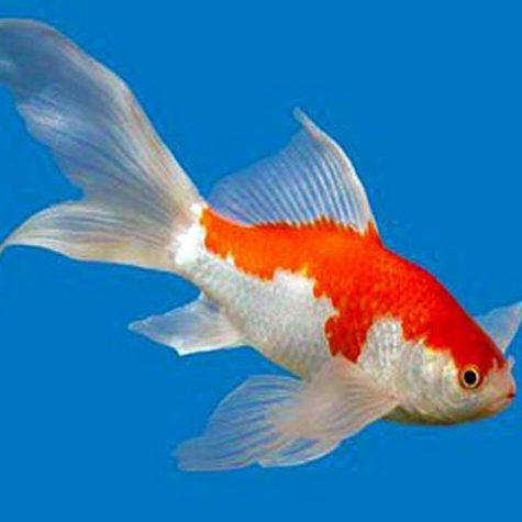 albino channel catfish arizona