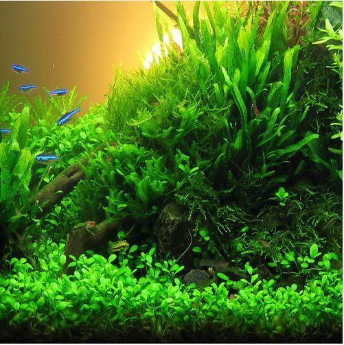 Native Aquatic Plants Sale
