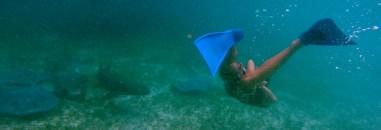 Even dichterbij gluren bij de onderwater buren. Shark's Alley
