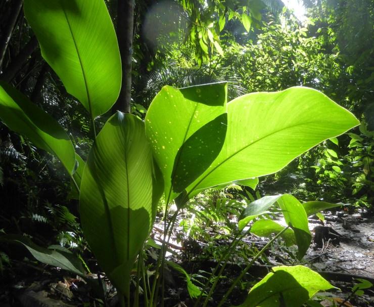 Jungle of kamerplant? Mayflower Bocawina NP