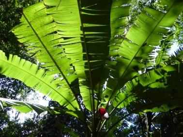 Parque Eco-Arqueológico Los Naranjos