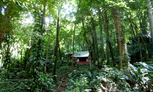 Onze jungle tent. Rio Cangrejal