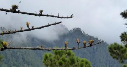 Plant op plant. Parque Nacional Montaña de Celaque