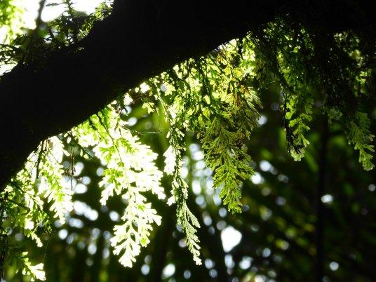 Zon in de jungle doet het altijd leuk. Mombacho