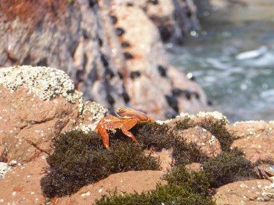 Crap gespot! Islas Ballestas, Paracas