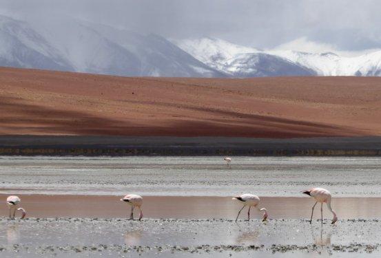 Nog meer flamingo's. Zuid Bolivia road trip