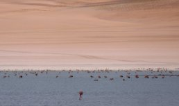 Jeeee flamingo's. Zuid Bolivia road trip