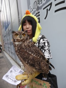 Natuurlijk is er een uilencafé in Tokio. Japan