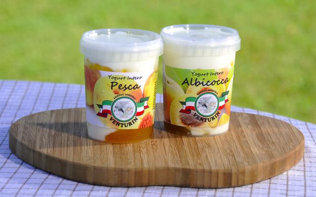 yogurt treviso