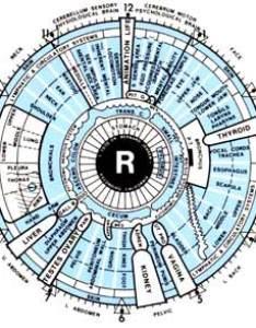 Iris chart aziz shamanism also iridology and healing rh azizshamanism