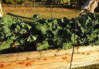 winter vegetable garden. Christmas Archives - Ramblings ...
