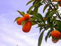 Winter Harvest From a Desert Vegetable Garden - Ramblings ...
