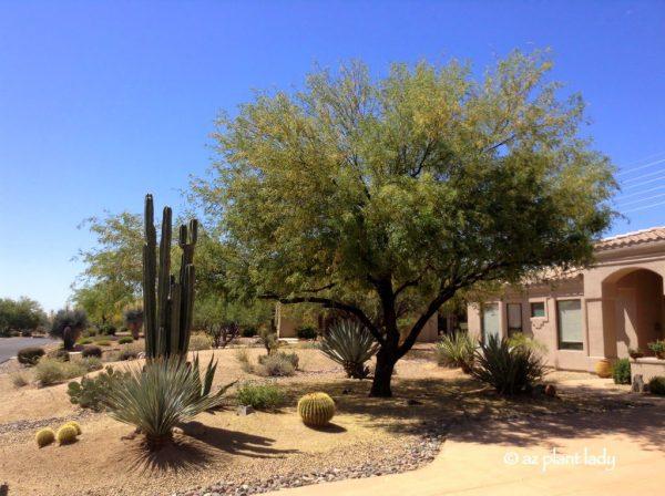 drought tolerant landscape irrigated
