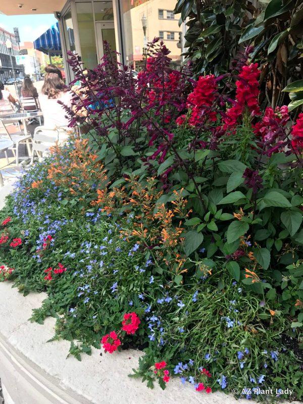 xeriscape gardening in georgia