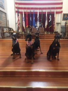 **CANCELLED** War Dogs to Recovery @ Veterans Museum, Balboa Park | San Diego | California | United States