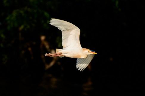 Austin Wildlife Photographer - Taylor Birds - Murphy Park Birds - Austin Wildlife Photography Workshop