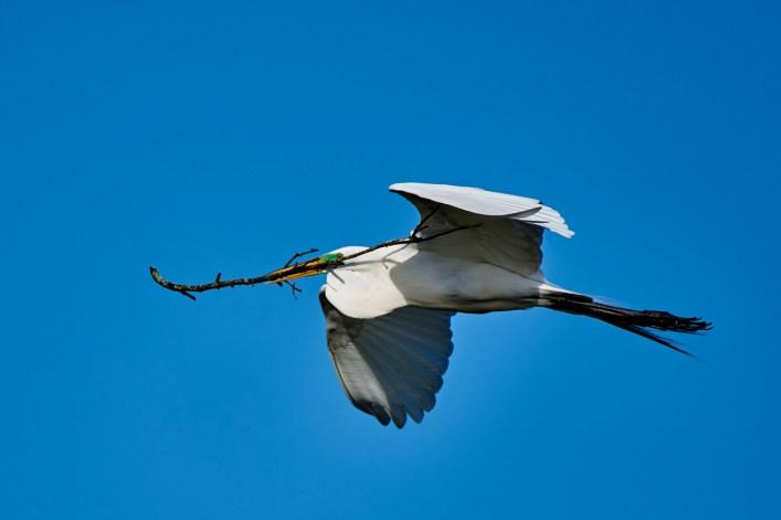 Austin Wildlife Photographer - Taylor Birds - Murphy Park Birds - Austin Wildlife Photography Workshp