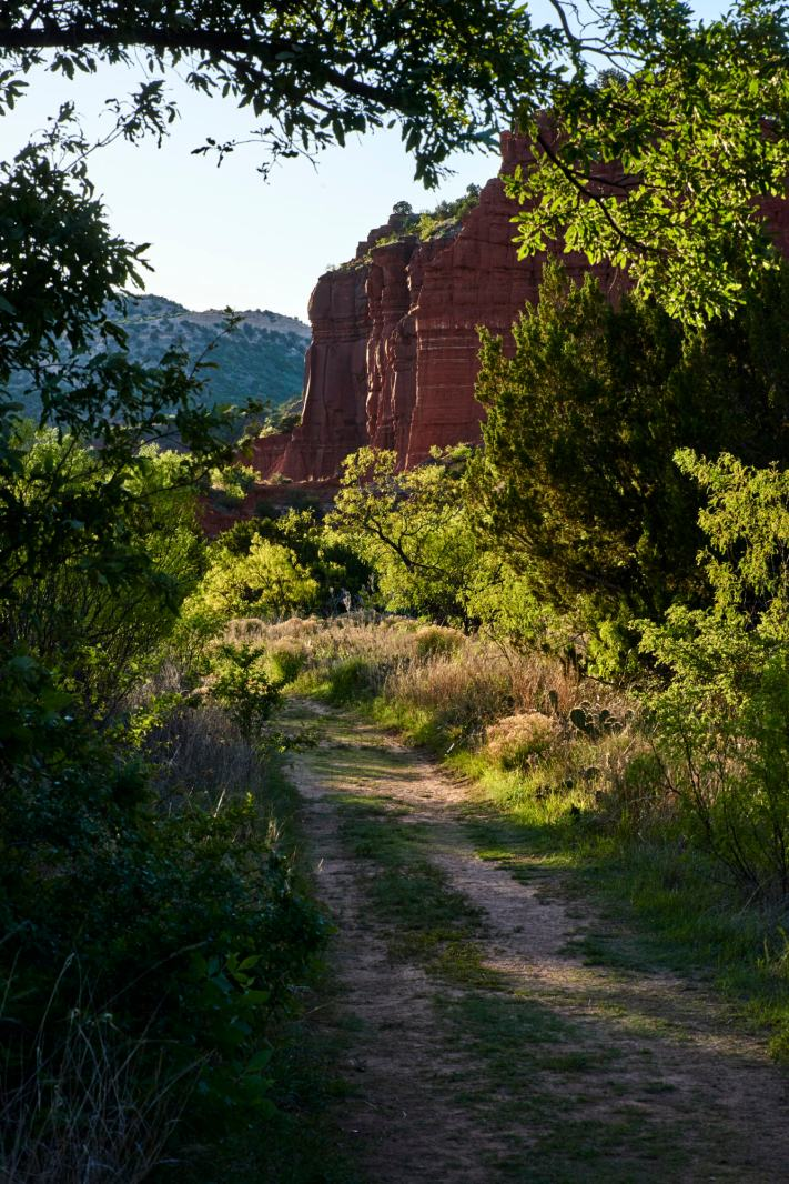A tree overhangs a hiking trail at Caprock Canyon state park in north Texas.