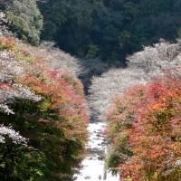 田代川・柿ヶ入沢散歩道