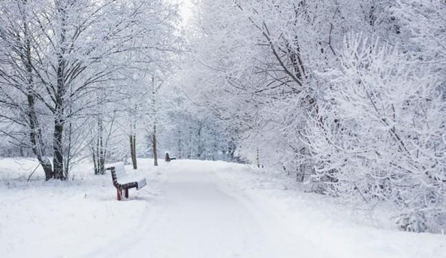 Alberi innevati Murale Paesaggio invernale bianco Sfondo Camera da letto Foto Decorazione domestica
