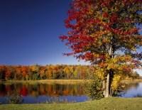 Autumn Landscape Wall Mural Blue Sky & Trees Wallpaper ...