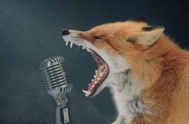 start the talk - screaming fox