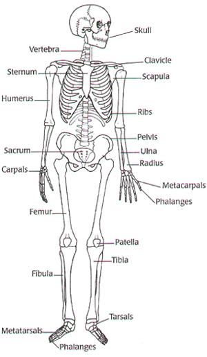 Vanessa Hudgens 2011: digestive system diagram worksheet