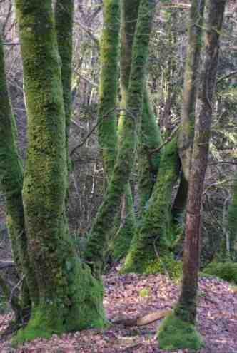 Bois de Plessis