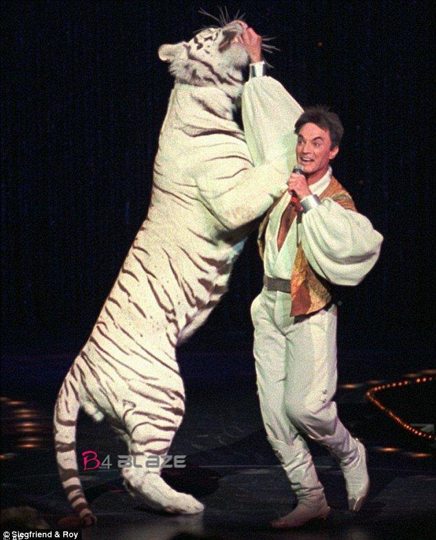 white tiger attack