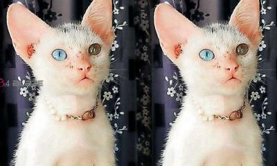 Kitten with different eye color