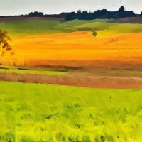 Golden and Green Country Fields
