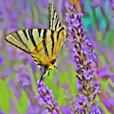 Painting of a Butterfly in the flowers