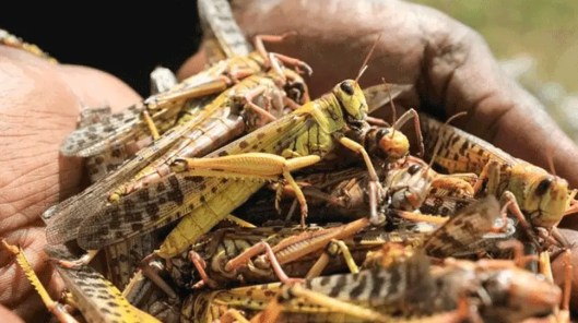 The administration is failing to stop these locust attacks