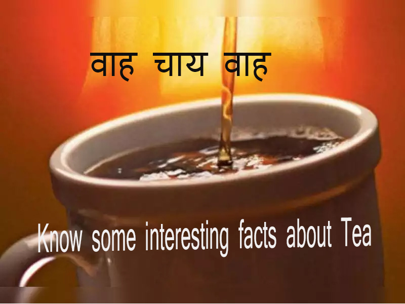 Know some interesting facts about tea