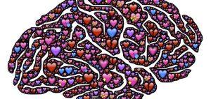 Know yur cupid Brain- Helical brain