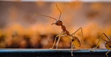 Hormigas en mi tumba