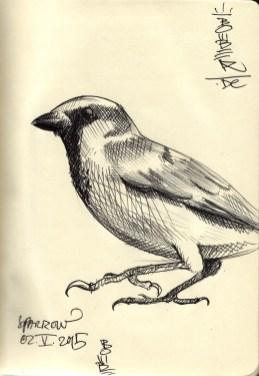 Spatz Sperling / sparrow Godelsberg Secco 2015