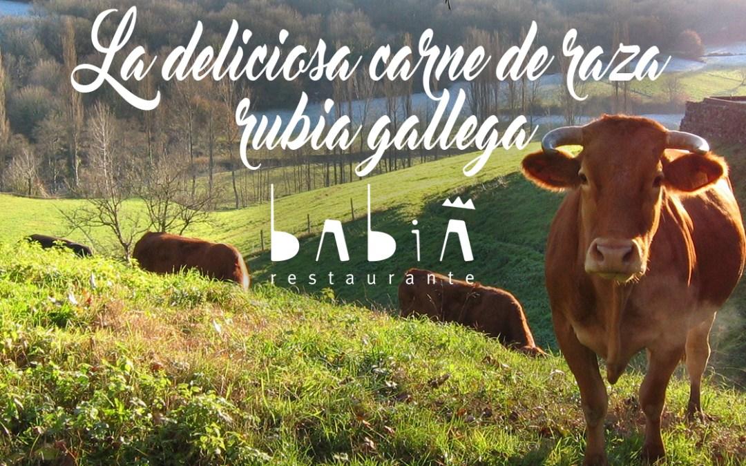 La deliciosa carne de raza rubia gallega, en Babia