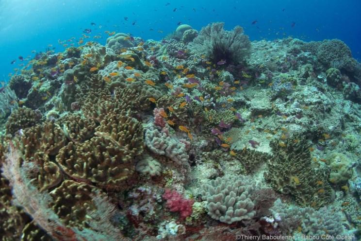 La vie foisonne autant sur le dessus que sur le pourtour de la colonne de corail