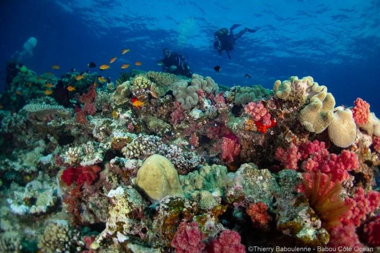 Récif corallien à Hienghène - Nouvelle Calédonie - Babou Côté Océan
