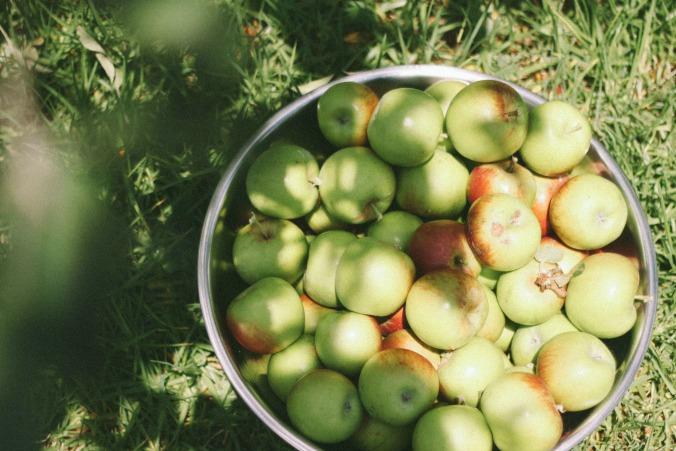 Wild Apple-9