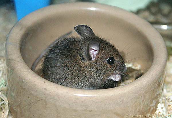 Eek Don T Freak These Baby Mice Are Adorable Baby