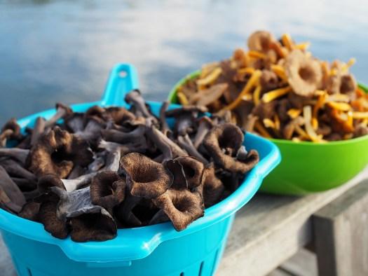 Mushroom hunting is a fun money-making hobby.