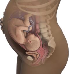 fetal neck diagram [ 1026 x 1026 Pixel ]