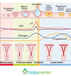 how your menstrual cycle works [ 1026 x 770 Pixel ]